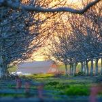 Kennicott Farms