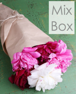 Mixed Box of peonies in three different colors from peonyhotline.com