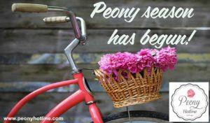 Peony Season has Begun at PeonyHotline.com