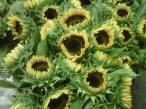Sunflowers Locally Grown