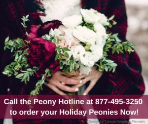 Peonies available for Winter Holidays