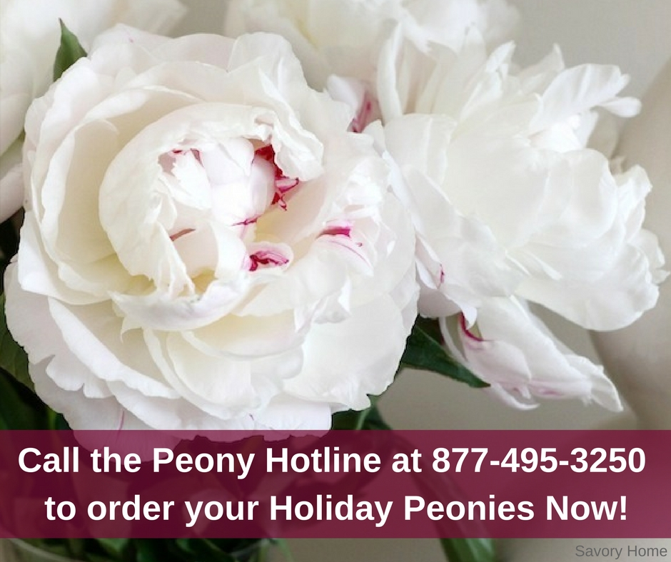 Bring excitement and beauty to your Holiday designs and bouquets with Peonies!