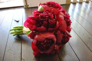 Red Charm Peonies from Chile for Thanksgiving and Winter Holiday!