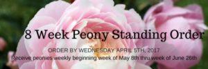 8 Week Peony Standing Order