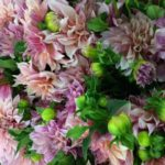 Dahlias for Fall Weddings from Locally Grown From Midwest Blooms
