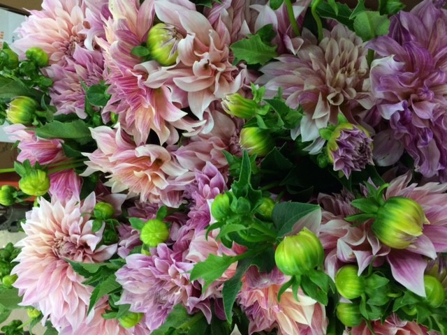Dahlias for Fall Weddings from Midwest Blooms