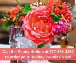Thanksgiving Peonies