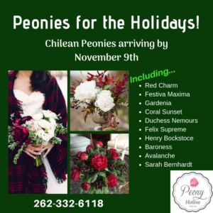 Peonies for the Holidays! Chilean Peonies are arriving Mid November